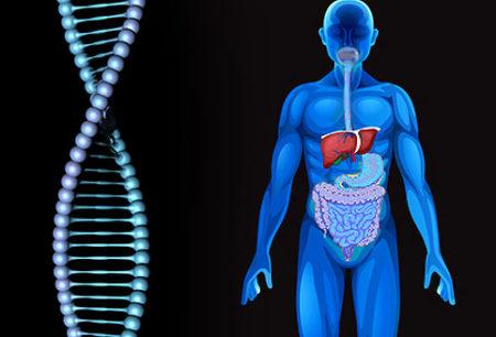 Генетические болезни печени