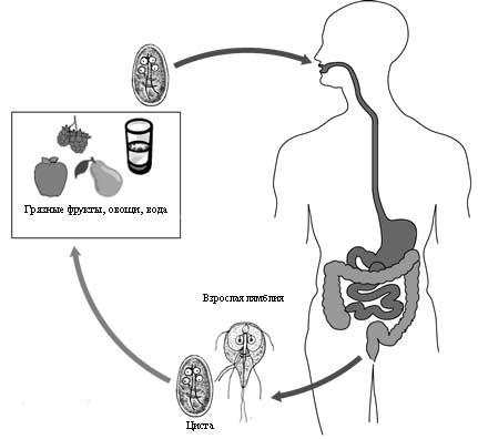 паразиты при беременности симптомы