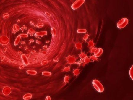 Кровь под микроскопом