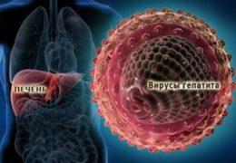 Вирусы гепатита